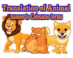 animal names in bisaya terms